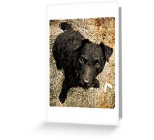 Fergus, Wire-Haired Patterdale Terrier Greeting Card
