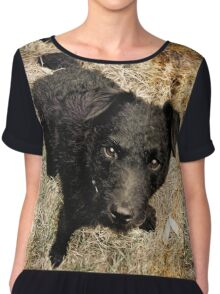Fergus, Wire-Haired Patterdale Terrier Chiffon Top