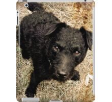 Fergus, Wire-Haired Patterdale Terrier iPad Case/Skin