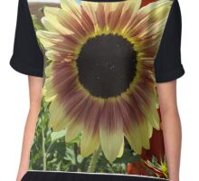 Sunflower Close-up, Santa Fe, New Mexico Women's Chiffon Top