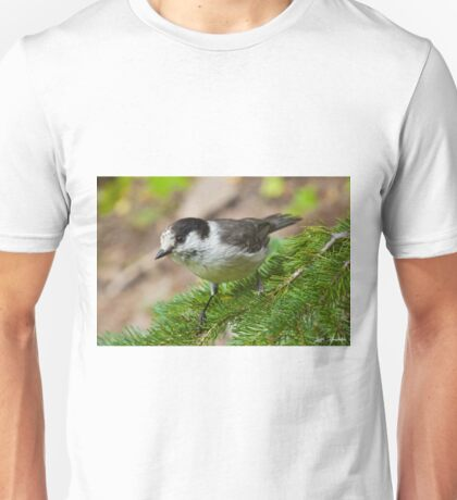 Gray Jay on Fir Tree Unisex T-Shirt