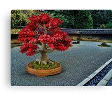 PixelSquid Red Bonsai Tree in the Zen Garden Canvas Print