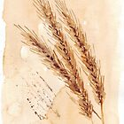 Golden Wheat - Botanical by Maree Clarkson