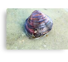 Clam Up Canvas Print
