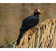 Nesting material Photographic Print