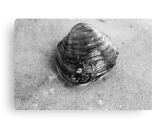 Clam Up - Black and White Canvas Print
