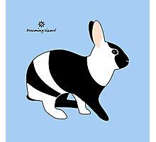 magpie harlequin rabbit Photographic Print