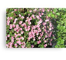 Beautiful spring bush with pink flowers. Metal Print