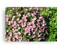 Beautiful spring bush with pink flowers. Canvas Print