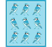Blue Jays Pattern Photographic Print