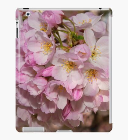 Cupertino Cherry Blossoms iPad Case/Skin