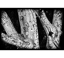 Punk Rock Tree Photographic Print