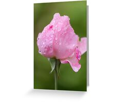 rose after the rain in the garden Greeting Card