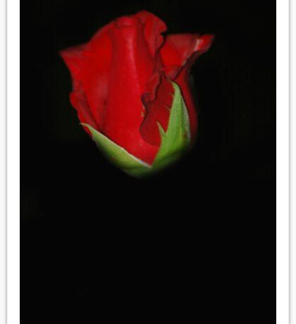 Rose - NSW Sticker
