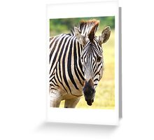 Zebra Greeting Card