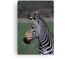 Zebra Style Canvas Print