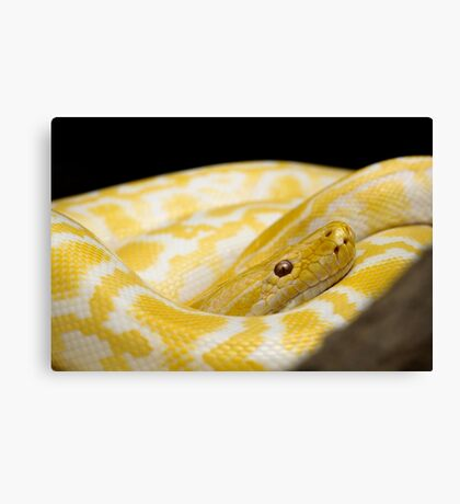 Yellow Snake Canvas Print