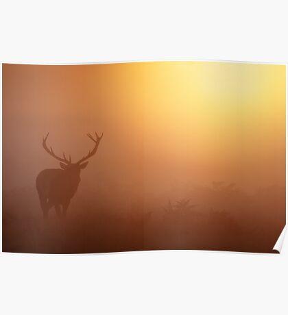 Red Deer Stag (Cervus Elaphus) Poster