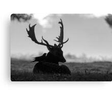 Fallow Deer (Dama dama) - black and white Canvas Print