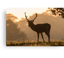 Fallow Deer (Dama dama) Canvas Print