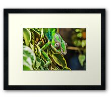 Exotic Reptile Framed Print