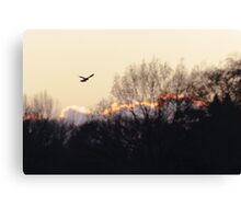 Kestrel (Falco tinnunculus) hunting Canvas Print