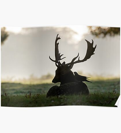 Fallow Deer (Dama dama) Poster