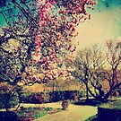 Vintage Magnolias by ShellyKay