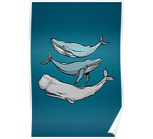 Three hand-drawn whales-friends Poster