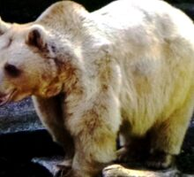 Brown Bear Sticker