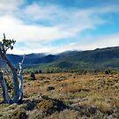 Mount Field by James McKenzie