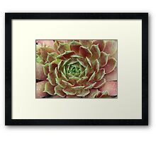 Natures Perfection Framed Print