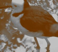 Black-winged Stilt - Sepia Sticker