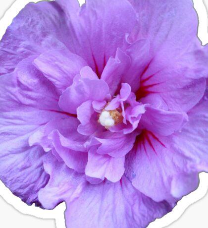 Purple hibiscus flower Sticker