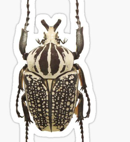 scarab  Sticker