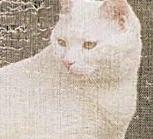 White Cat in Window Sticker