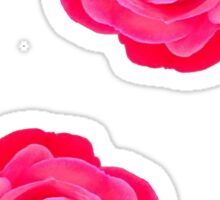 Two pink roses Sticker
