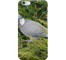 Wood Pigeon In Leylandii iPhone Case/Skin