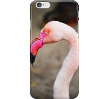 Pink Greater Flamingo iPhone Case/Skin