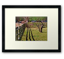 Fence, Shadow's, Tree. Framed Print