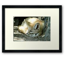 Resting Fox by the Shade Framed Print