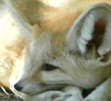 Resting Fox by the Shade Sticker