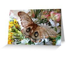Butterfly Kisses Flowers Greeting Card