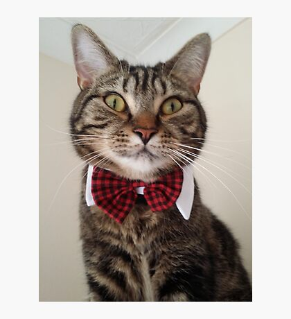 Cat in bow tie  Photographic Print