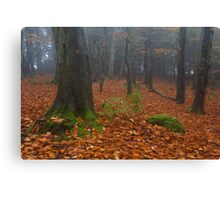 tollohill woods Canvas Print