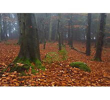 tollohill woods Photographic Print