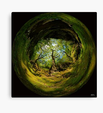 Ness Glen, Mystical Irish Wood Canvas Print