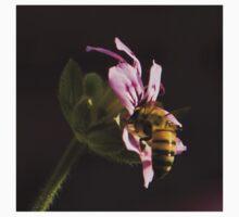 The pollinator One Piece - Long Sleeve