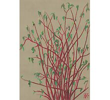 """Red twigs"", pastel drawing, nature art, green, red, tree branches Photographic Print"