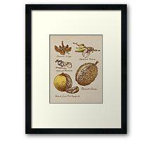 Steampunk  Fruit Framed Print